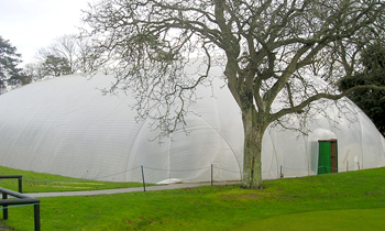 Millfield Cricket bubble